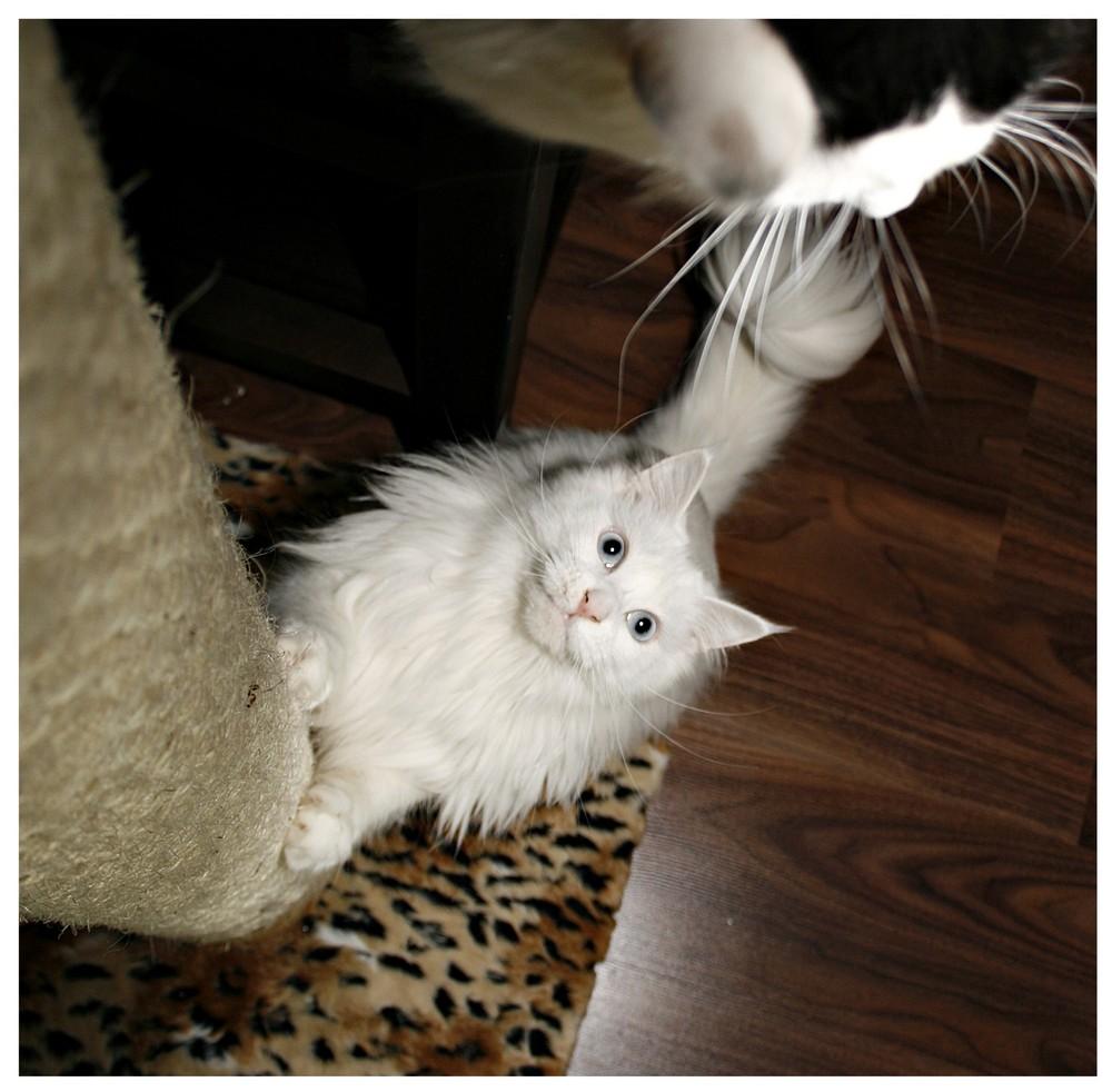 ...eine Katze will nach oben :-)))))