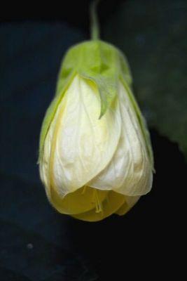 Eine kleine Blume