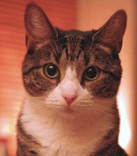 eine kleine eigensinnige Katze