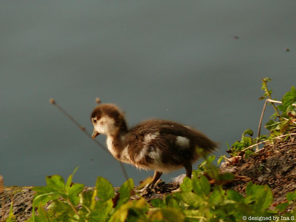 Eine kleine Ente :)
