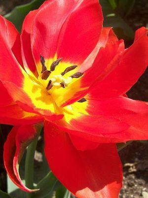 Eine kleine Erinnerung an den Frühling
