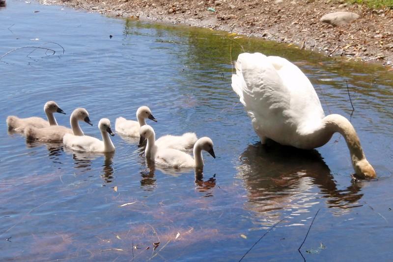 Eine kleine Familie