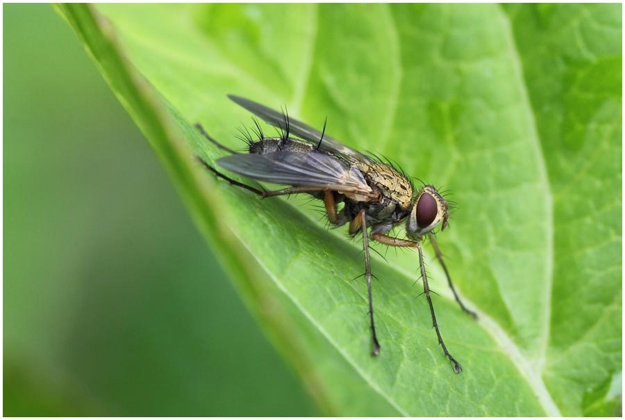 Eine kleine Fliege
