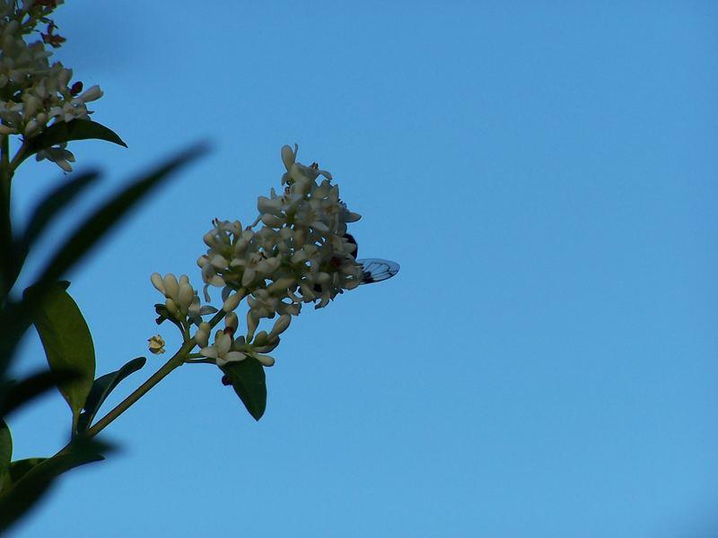eine kleine Fliege - versteckt sich
