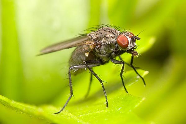 Eine kleine, große Fliege nach dem Regen