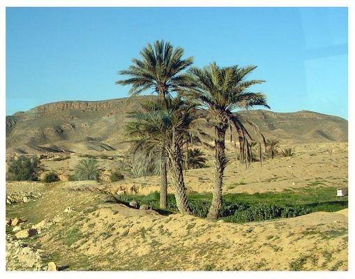 Eine kleine Oase in der Wüste von Tunesien