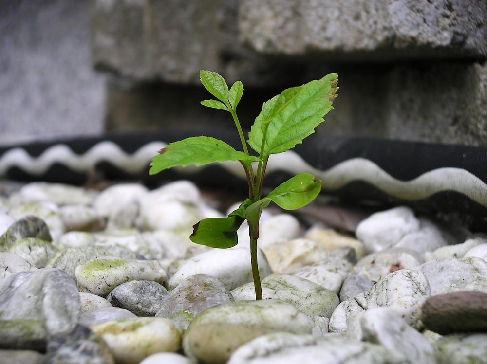 Eine kleine Pflanze