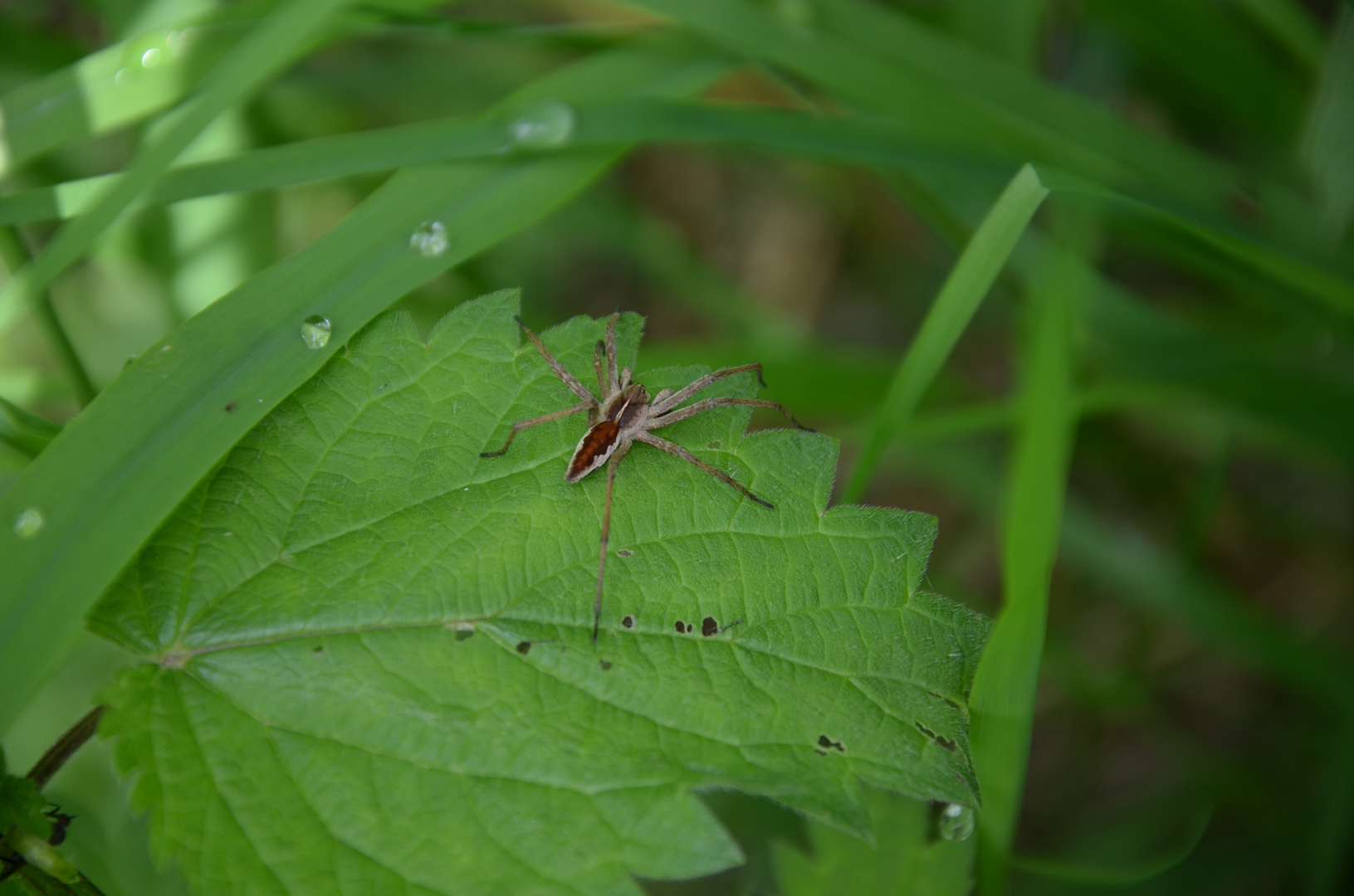 Eine kleine Spinne krabbelt...