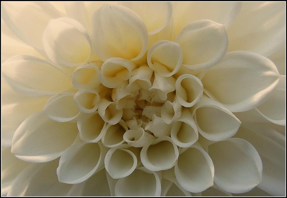 Eine Kugelblume.....