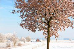 Eine kurze Geschichte vom Winter im Teufelsmoor...