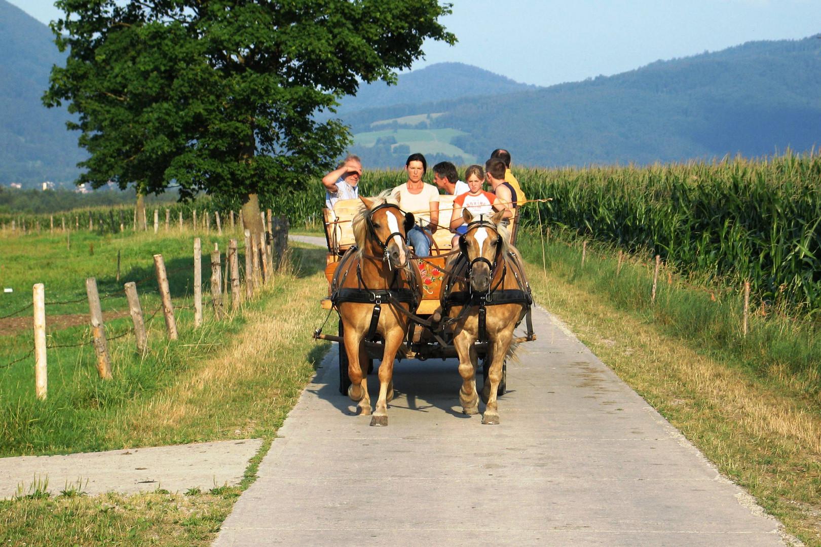 Eine Kutschen- Tour am Rande der Alpen in Oberbayern.
