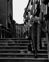 eine leopardin geht spazieren