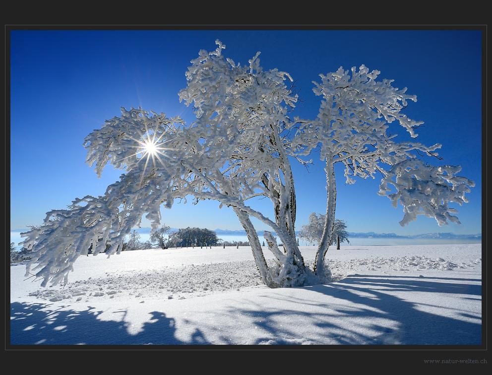 Eine letzte Winterimpression