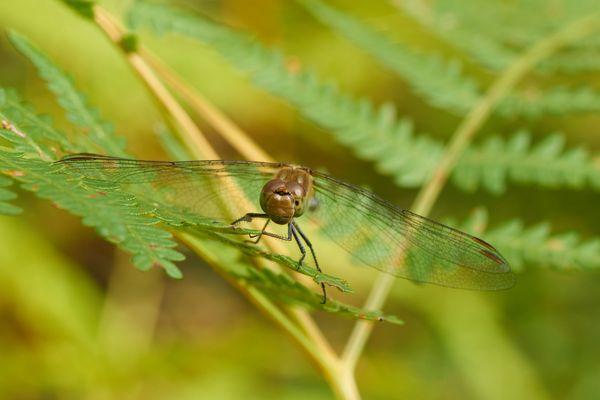 Eine Libelle auf ihrer Haltestelle 2