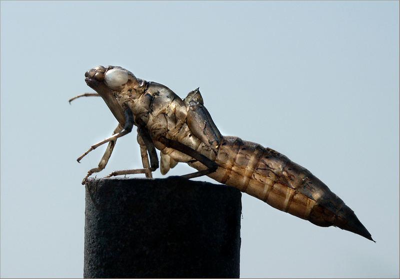 Eine Libelle hat sich Verabschiedet-1