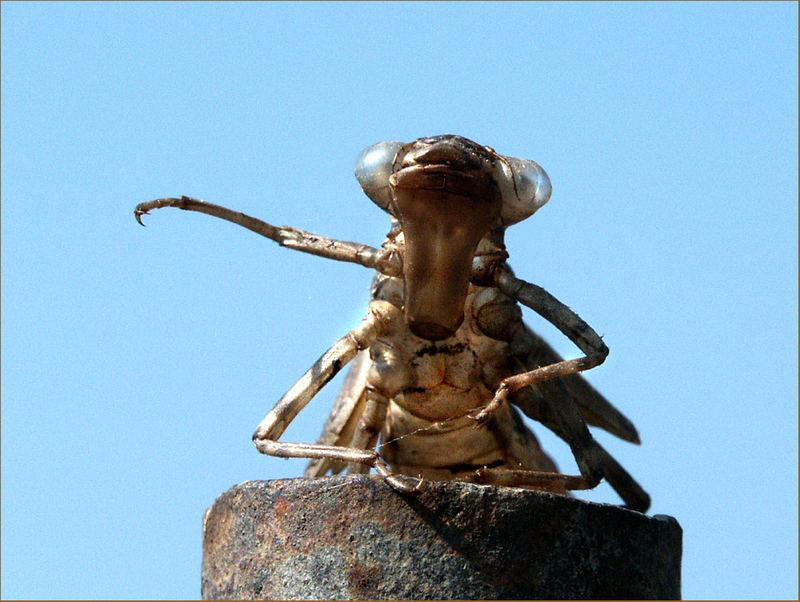 Eine Libelle hat sich Verabschiedet