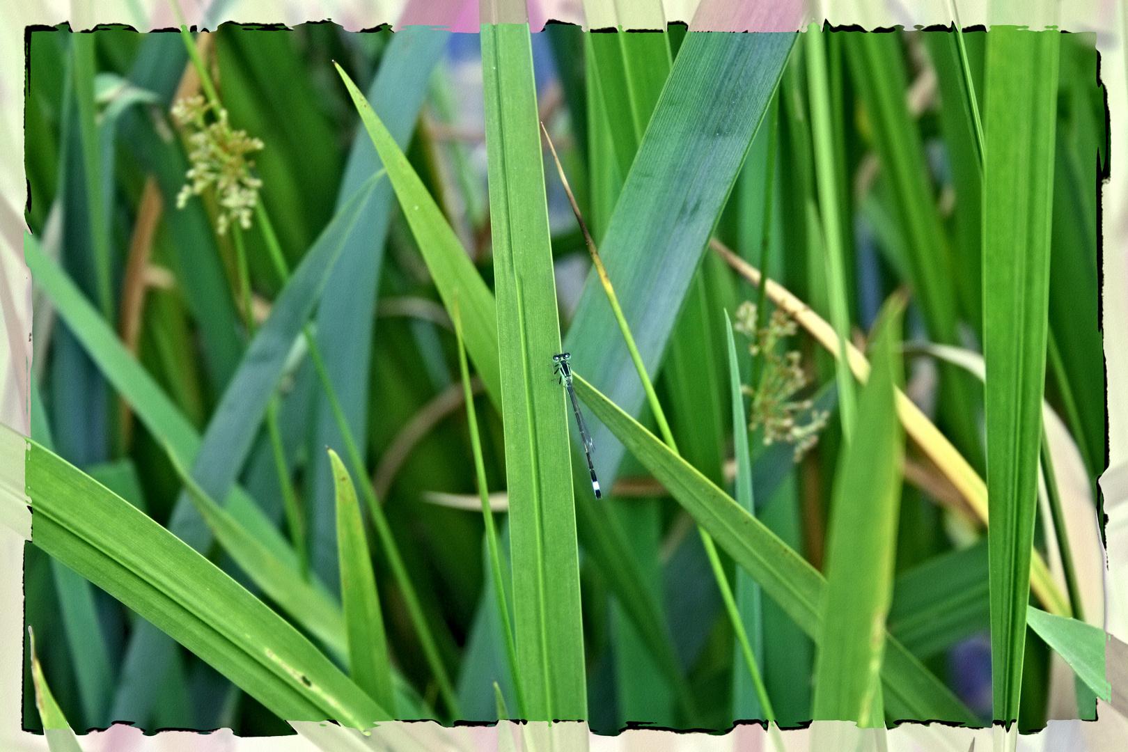 Eine Libelle ohne Makro Aufgenommen
