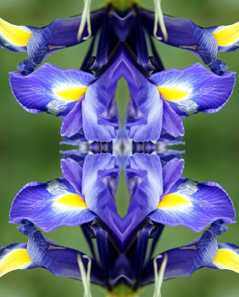 eine Lilie spiegelt sich