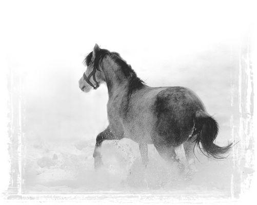 Eine Marokkanerin in der (Schnee-) Wüste
