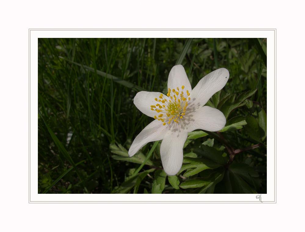 Eine meiner Lieblingsblumen