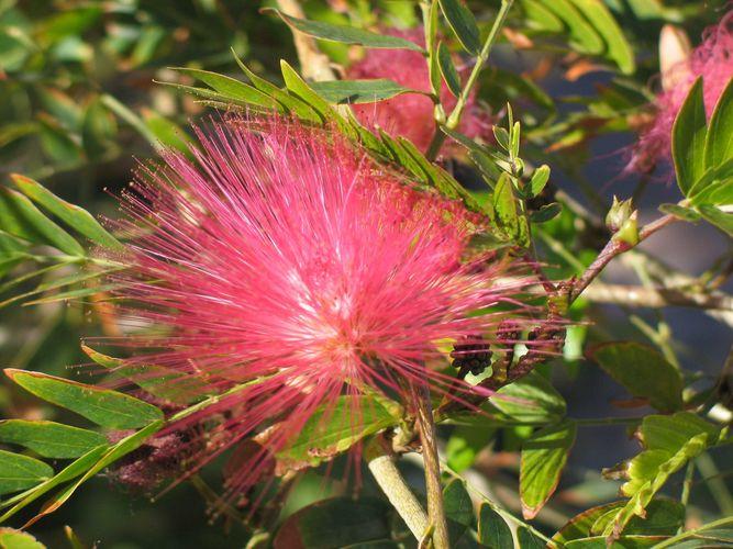 eine mir unbekannte Blume