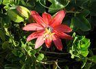 Eine mir unbekannte Pflanze
