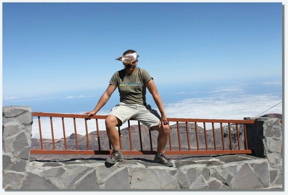 Eine Möwe auf dem Teide, Giga-Tour.com