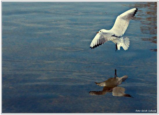 Eine Möwe fliegt über das Wasser und der Schatten fliegt mit