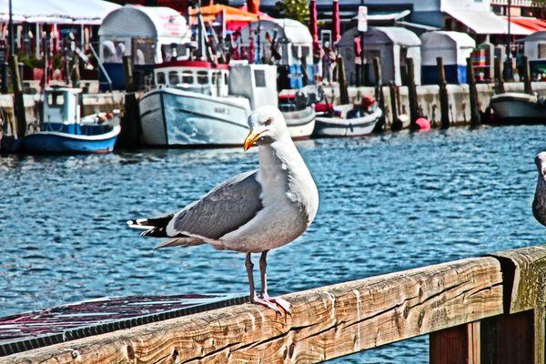 Eine Möwe im Hafen.