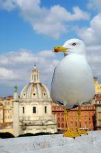 Eine Möwe in Rom