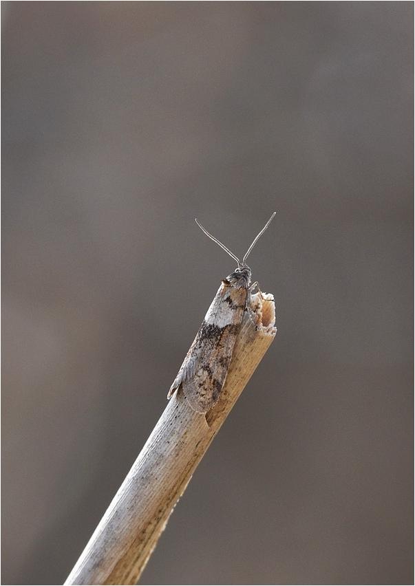 Eine Motte ...