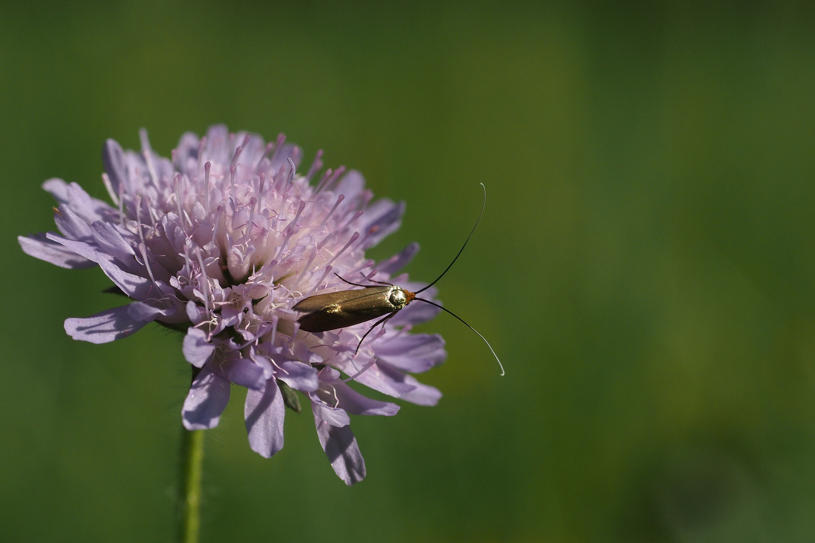 eine Motte fliegt gleich -weg-