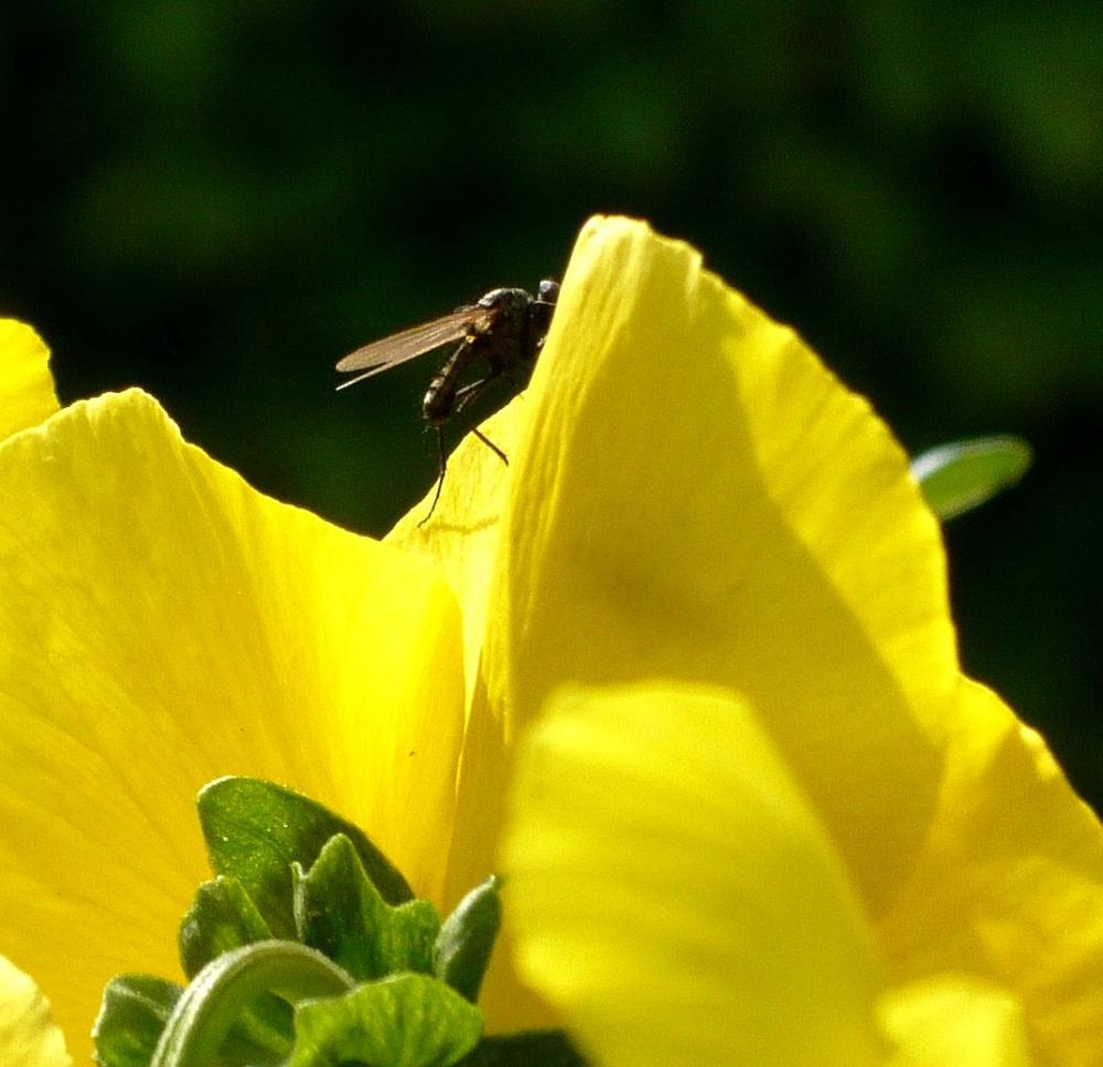Eine Mücke ?