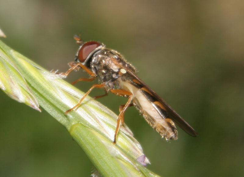 Eine Mücke ganz groß!