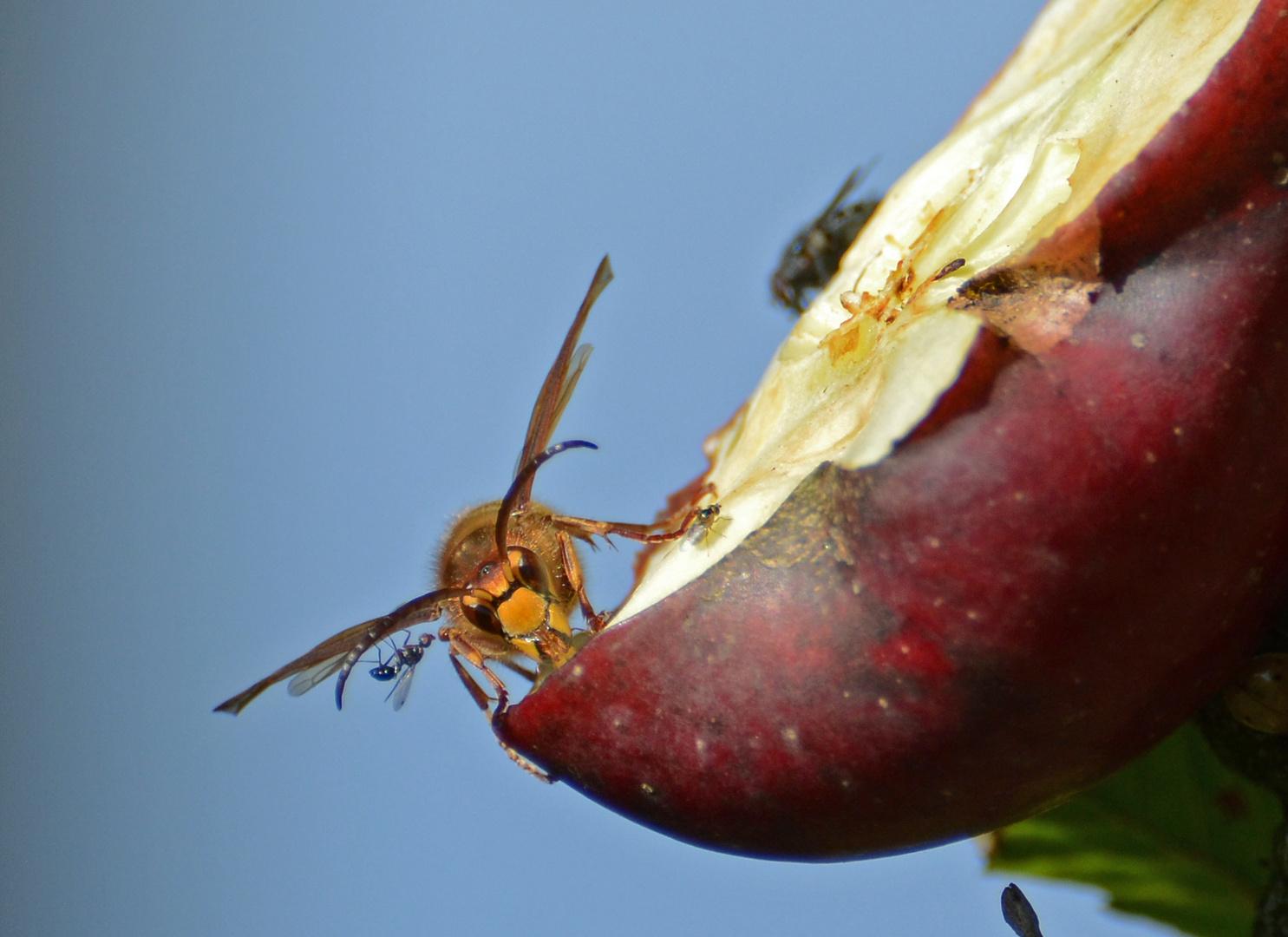 Eine mutige Ameise !