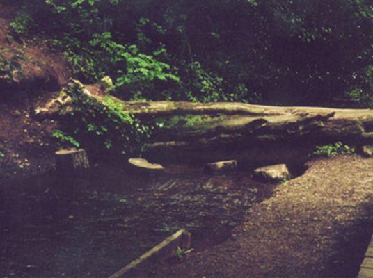 Eine natürliche Brücke