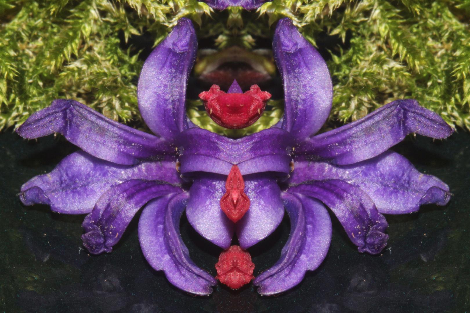 Eine neue Blüte ein Insekt oder ...
