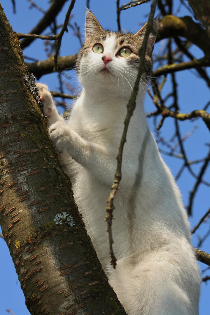 eine neugierige Katze
