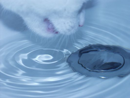 Eine neugierige Katze und Wasserperlen