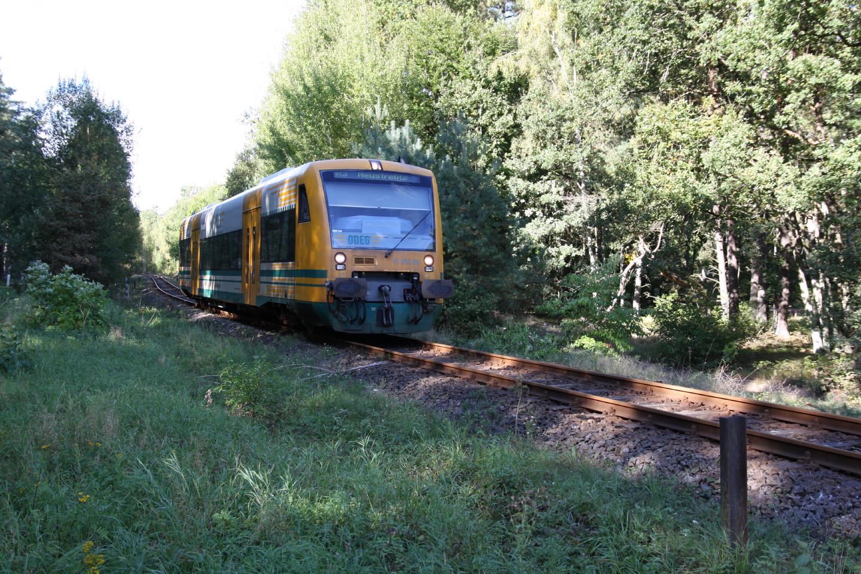 Eine ODEG fährt im Wald nach Neustrelitz
