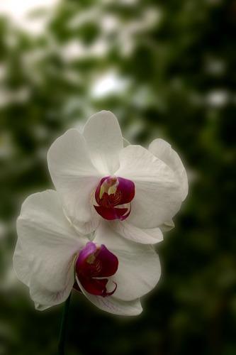 Eine Orchidee?