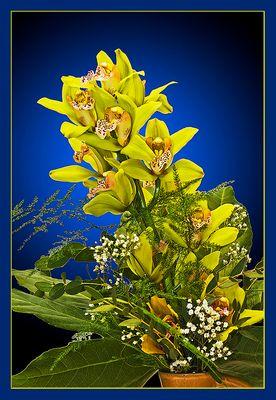 Eine Orchidee für Euch