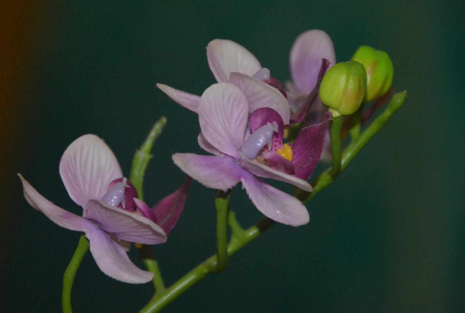 Eine Orchidee sagt Danke!