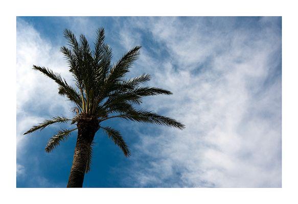 Eine Palme...