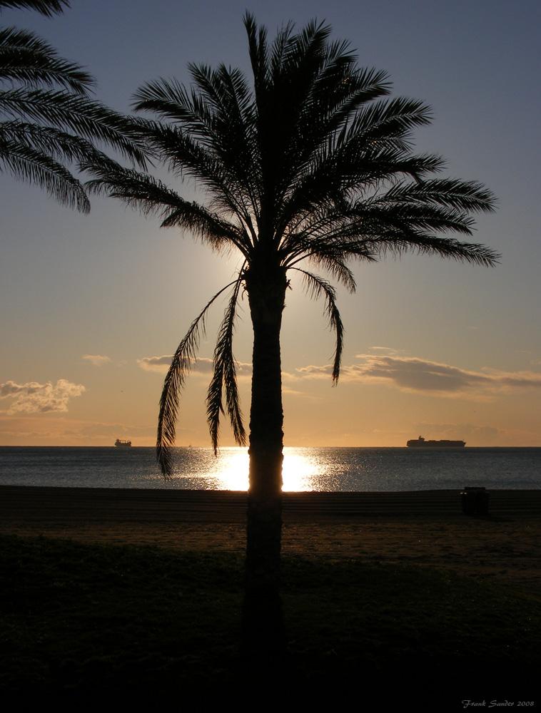 Eine Palme am Strand