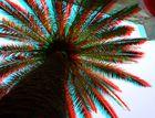 Eine Palme mall anders