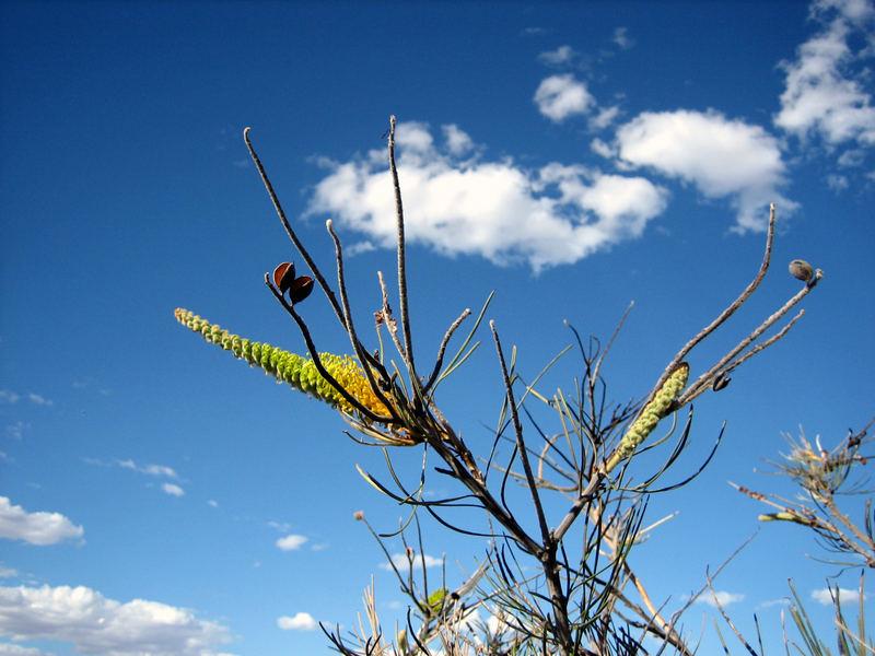 Eine Pflanze am Ayers Rock, Australien