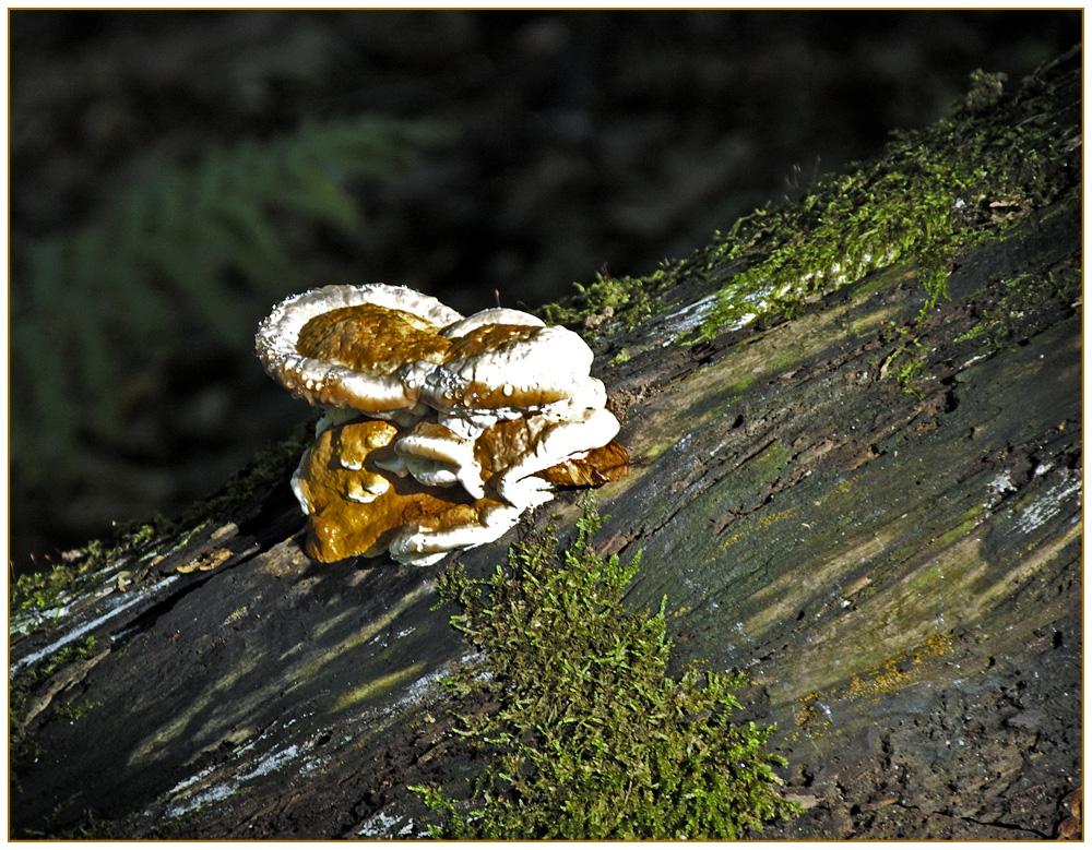 Eine Pilzformation.
