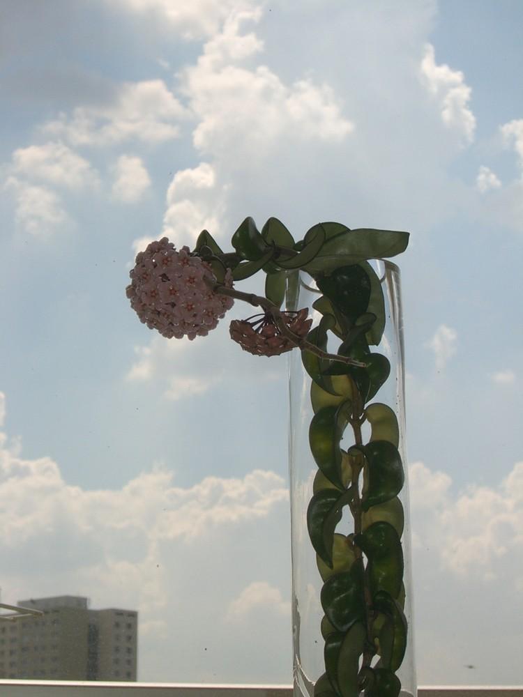 ???Eine Porzellanblume entwickelte sich