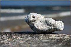 Eine Robbe auf Rügen